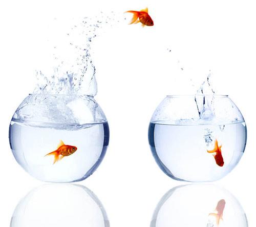 Arcurs/fish.jpg